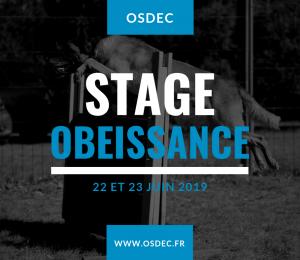 Stage obéissance 2019